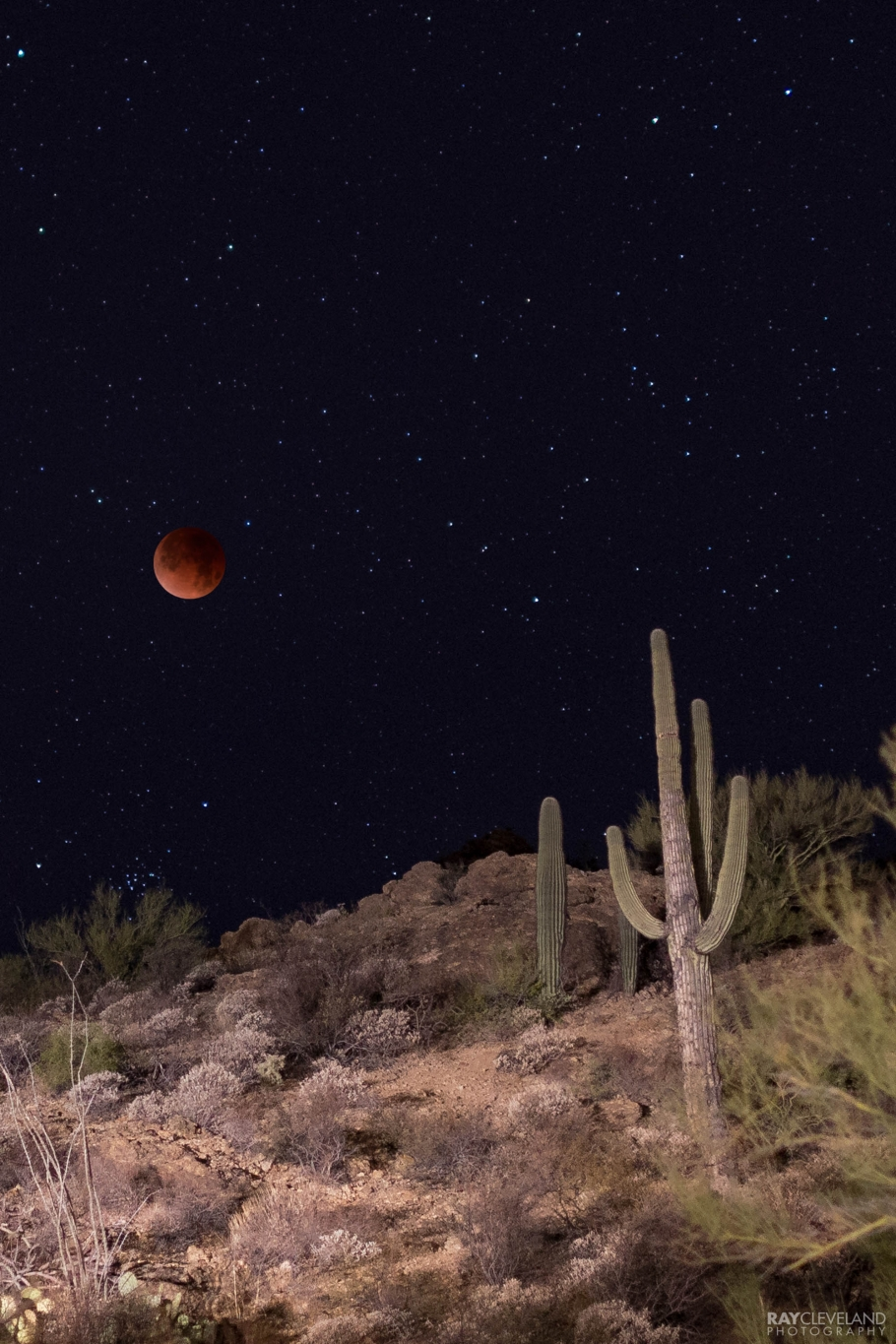 Composite of the desert and blood moon. The foreground was lit by incoming cars.